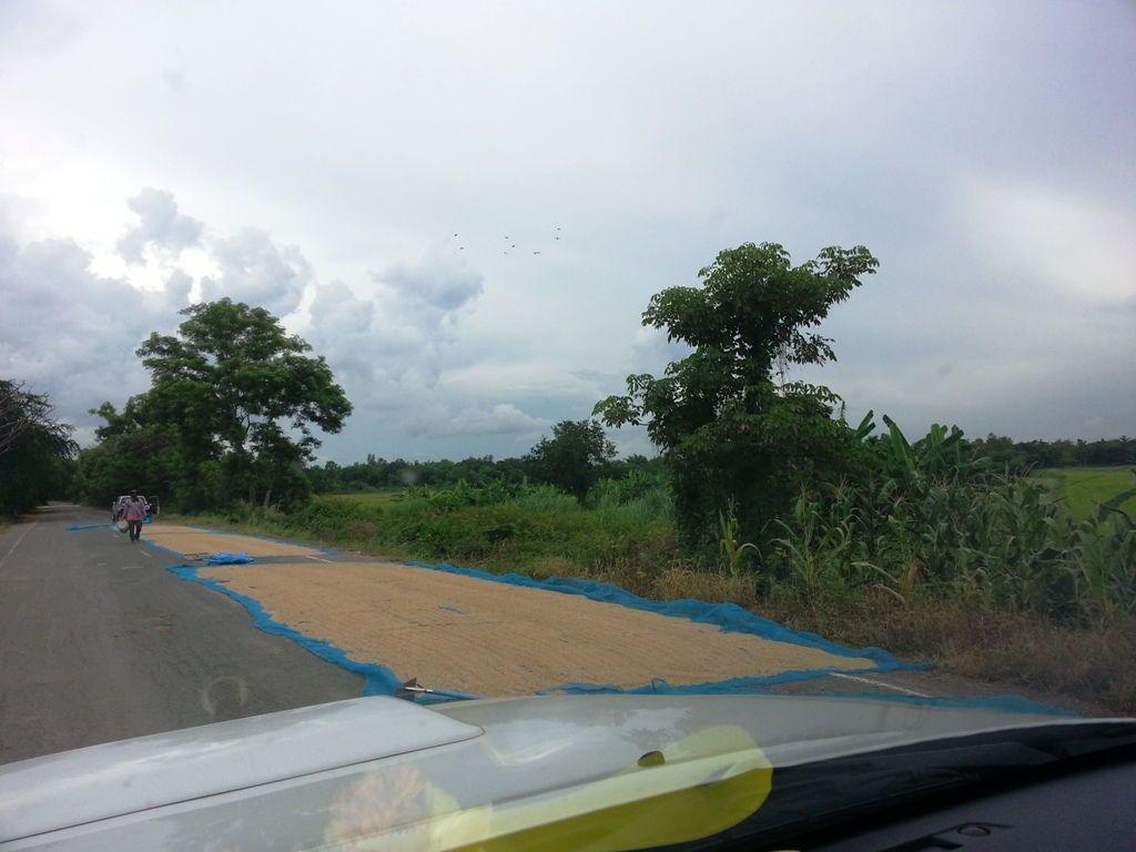 drying rice on the road in thailand