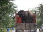 Elephant on Truck. Near Kanchanaburi Central Thailand