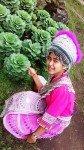 Hmong Hill Tribe Doi Pui cabbage garden