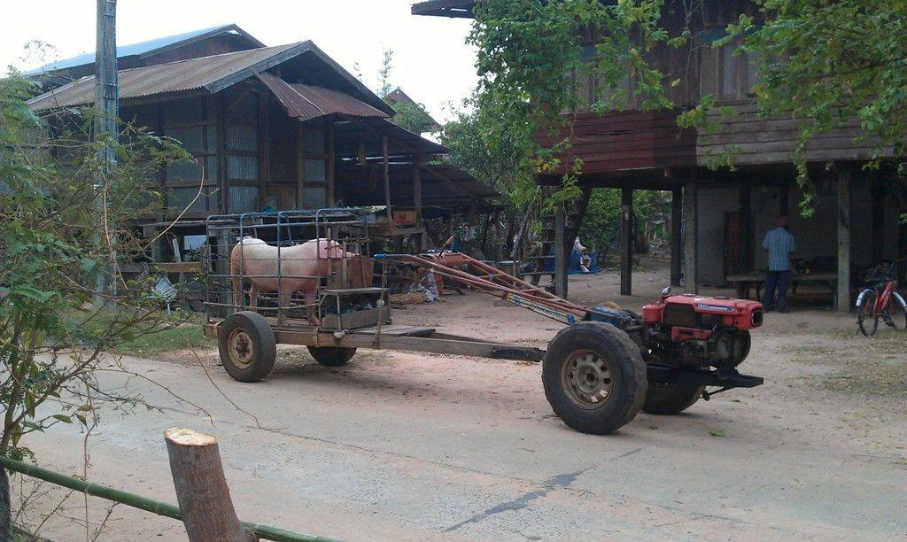 Wapi Pathum Isan Region Pig on rotary hoe trailer
