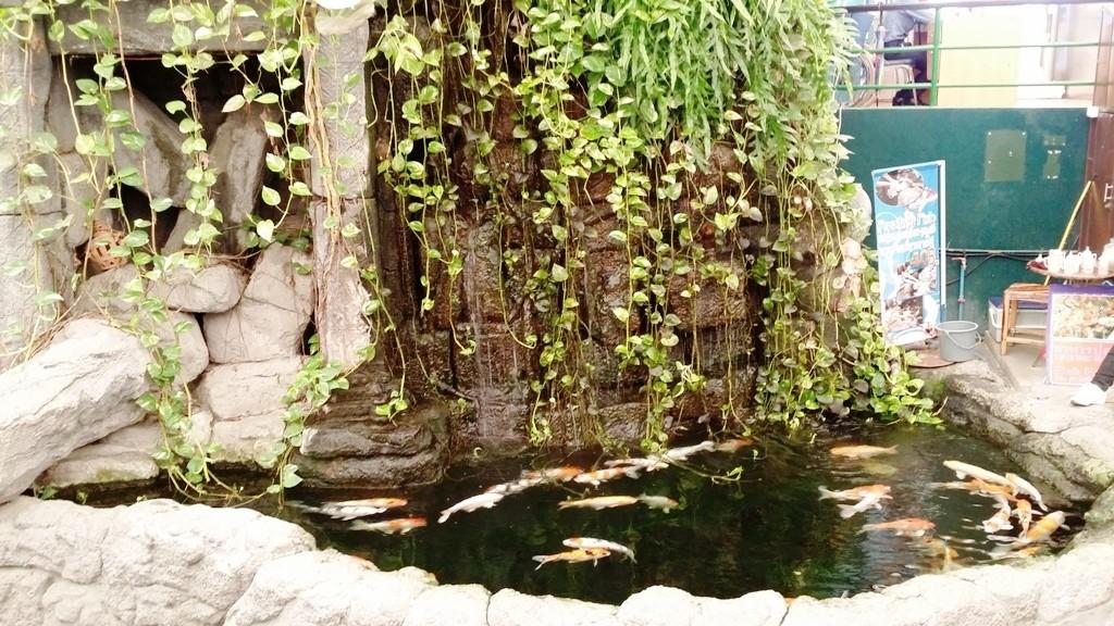 Koi Pool at Underwater World Pattaya